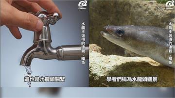 「水龍」頭景觀! 經濟部諧音梗圖籲節約用水