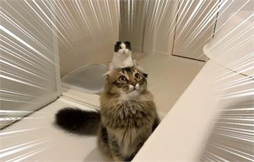無修圖《貓的頭上長出一隻貓》意外捕捉根本貓香菇的奇蹟視角,笑翻10萬推民ww