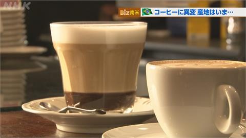 30年來最大寒流重創巴西咖啡豆!農民推「咖啡虛擬貨幣」自救