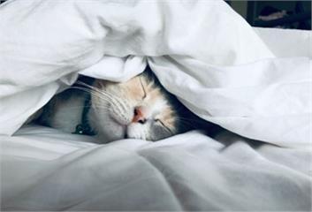 創造貓咪快樂無壓生活環境<上>