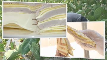 不只甜湯與麵包  冰棒也吃得到芋頭 芋頭四季香  甜點多元開發滿足芋泥控
