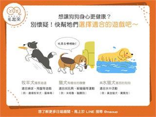 【狗狗健康】想讓狗狗身心更健康?快幫牠們選擇適合的遊戲吧!|寵物愛很大