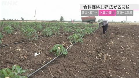 天氣衝擊、中國大量進口糧食 全球糧食價格漲勢恐常態化