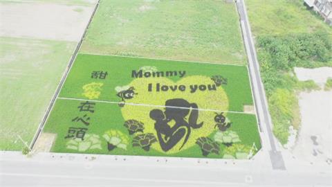 媽咪我愛你!苑裡彩繪稻田 「母抱嬰」洋溢滿滿母愛