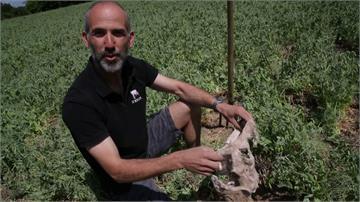 土壤健康怎評估?法國農夫用一條內褲判斷