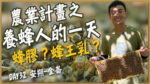 密集恐懼症不要看!近距離直擊蜜蜂築巢 雌雄差異竟影響房間大小