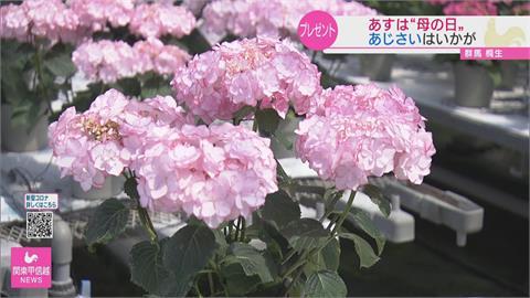 日本母親節新流行 不送康乃馨改送繽紛繡球花