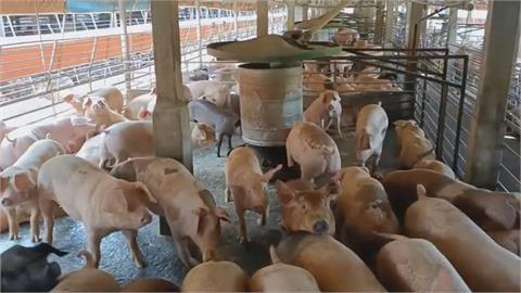 快新聞/今再添1肉品驗出非洲豬瘟陽性 4養豬場違法用廚餘皆遭開罰3萬元