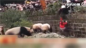 驚恐瞬間!成都女童不慎掉入飼養區 大貓熊步步逼近