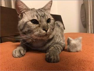 有愛貓奴收集《貓毛球》感覺囤個10年是不是就可以做件衣服惹?