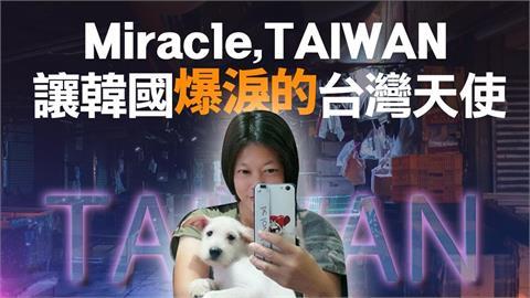 另類台灣之光!天使愛媽不放棄 「流浪狗從癱瘓中站起」感動南韓網友
