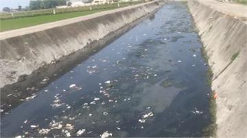 雲林養豬場違法排放廢水 農民怒:菜園旁邊都是OO
