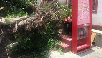 快新聞/神明有保佑! 台南今又有樹倒塌 神奇閃過老廟公爐