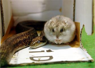 「我不吃我的好朋友!」整理出最不尋常的動物情誼,看完會發覺動物並沒那麼單純|寵物愛很大