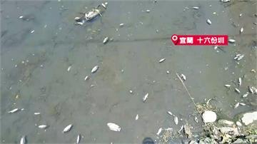 水位下降  宜、花先後傳出魚群暴斃事件