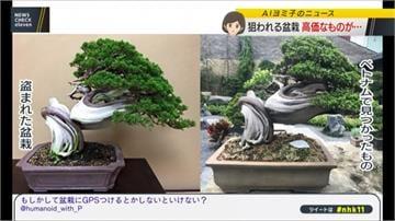 東京百萬日幣盆栽失竊 主人在越南尋獲
