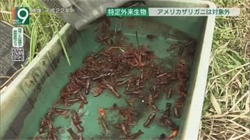 日本小龍蝦危及生態 11月起禁寵物店販售
