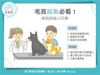 【狗貓健康】毛孩結紮必看!術前術後小叮嚀|寵物愛很大