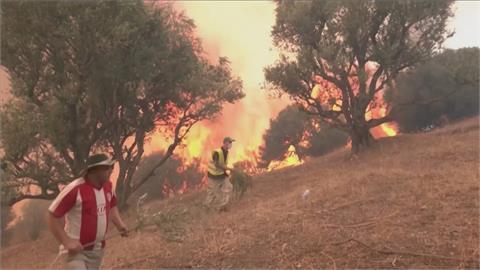 地中海野火燒進北非! 阿爾及利亞71人喪命