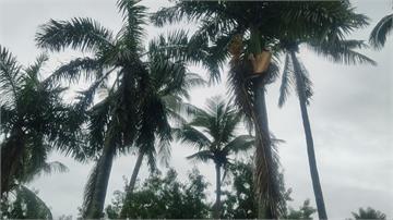 眼前驚見椰子樹葉砸下 駕駛急煞躲過一劫