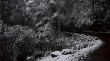 快新聞/桃園拉拉山下冰霰! 巨木區一片白茫茫