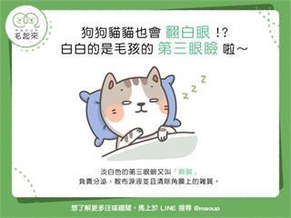 【狗貓小學堂】狗狗貓貓也會翻白眼!?白白的是毛孩的「第三眼瞼」啦~|寵物愛很大