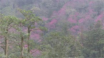 太平山被爆員工亂丟廚餘丟滿山坡 羅東林管處:將依森林法開罰