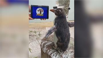 瀕危企鵝愛看片 最愛「企鵝家族」卡通