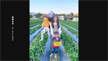 網美採草莓拍照 老公疑「腳踩草莓苗」惹議