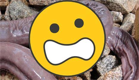 外型奇特「GG蛇」入侵美國!專家揭神秘真相:最長達1.5公尺