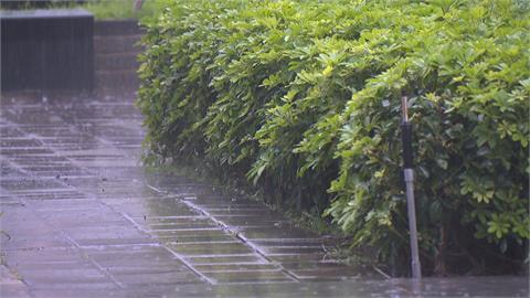 淅淅瀝瀝雨下來了! 週日下到週三 下週六另波鋒面報到