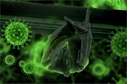 研究:寮國蝙蝠冠狀病毒傳人結構極似COVID