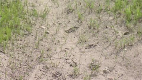 動物保護區變荒原 美西88%地區嚴重乾旱