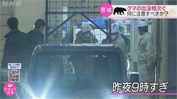 日本熊出沒頻傳! 石川熊熊逛賣場嚇壞居民