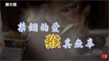 異言堂/台灣獼猴從保育類除名 為什麼私養情況愈來愈盛?
