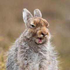 你知道《偷拍兔子》兔子會有什麼反應?就讓這隻兔子好好「告訴」你w