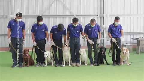 泰訓練「嗅探犬」聞武肺 1秒分辨準確率9成