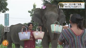 泰大象因疫情「失業」 轉行當網紅賺飼料費