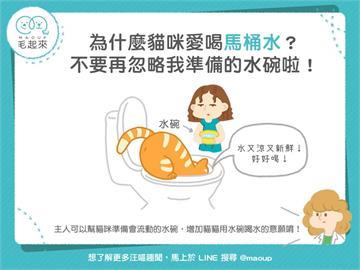 【貓貓行為】為什麼貓咪愛喝馬桶水?不要再忽略我準備的水碗啦!|寵物愛很大