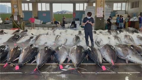 黑鮪魚季餐廳全數停業!  黑鮪魚價格大跌 漁會籲政府對漁民紓困