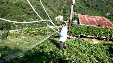 快新聞/本土登革熱群聚事件!三峽父子疑在「菜園」周邊感染