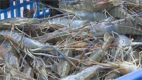 一樣釣蝦各自表述 休閒農場可開放、釣蝦場業者喊不公