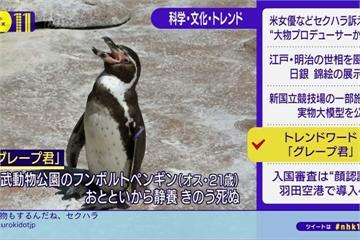 振翅求偶動漫女孩爆紅 企鵝「葡萄君」過世