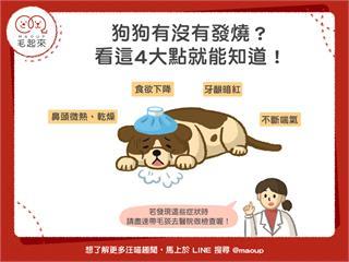 【狗狗建康】狗狗有沒有發燒?看這4大點就知道!