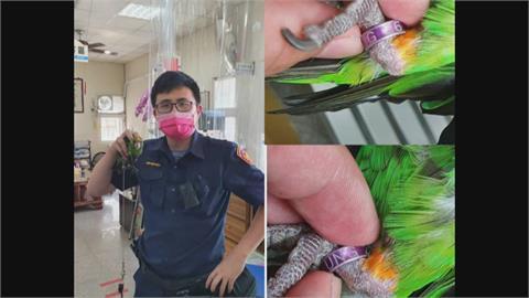 不是飛鴿來傳書 走失鸚鵡飛警所「報案求援」