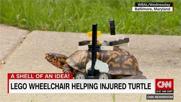 用樂高當輪椅!受傷烏龜趴趴走