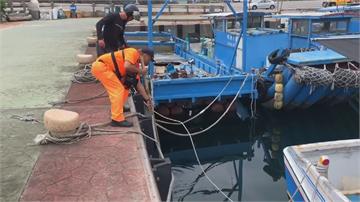 迷途綠蠵龜誤入花蓮港區海巡人員救起 緊急連絡海大