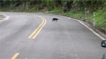 小黑熊迷路逛大街 南安瀑布緊急封閉