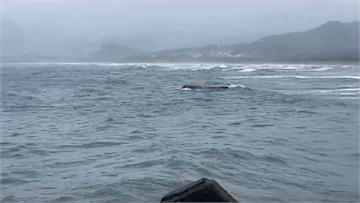 快新聞/「衝」現場!金山水尾漁港外漁船翻覆3人落海 衝浪客第一時間救援