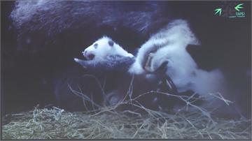 快新聞/圓圓第2次當媽母愛大噴發 與愛女「圓仔妹」重聚首日抱緊緊成功餵奶